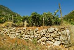 Lanscape de vigne en Croatie Photo libre de droits