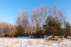 Lanscape del invierno en día congelado Imagen de archivo libre de regalías