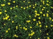 Lanscape del lío de las primaveras imagenes de archivo