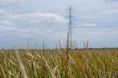 Lanscape dell'erba asciutta con la posta di elettricità immagine stock libera da diritti