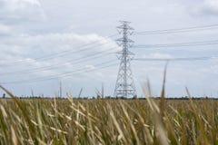 Lanscape dell'erba asciutta con la posta di elettricità Immagini Stock Libere da Diritti