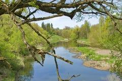 Lanscape della natura con il fiume e l'albero Fotografia Stock
