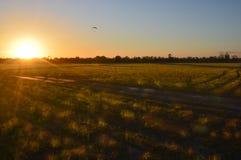Lanscape di tramonto Fotografia Stock Libera da Diritti