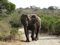 Lanscape e fauna selvatica del Sudafrica al parco 1 del kruger Fotografie Stock