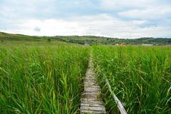 Lanscape with footbridge in the reed reserve. Stock Photos