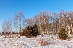 Lanscape  in frozen day Stock Photo