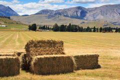 Lanscape with haystacks Royalty Free Stock Photography