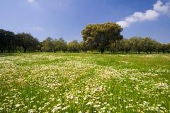 Lanscape in la stagione di primavera Fotografia Stock