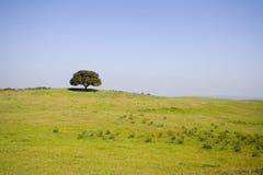 Lanscape in la stagione di primavera Fotografia Stock Libera da Diritti