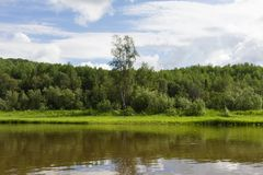Lanscape with lonely birch. Krasnoyarsk region, Russia Stock Images