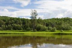 Lanscape med den ensamma björken Krasnoyarsk region, Ryssland Arkivbilder