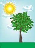 Lanscape met boom met duidelijke hemel Royalty-vrije Stock Afbeelding