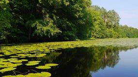 Lanscape met waterlelies Royalty-vrije Stock Foto's