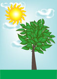 Lanscape mit Baum mit freiem Himmel Lizenzfreies Stockbild