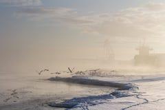 Lanscape nevoento bonito do inverno com pássaros de voo e bulker de madeira Foto de Stock Royalty Free
