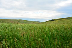 Lanscape with reed and hills Royalty Free Stock Images