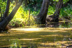 Lanscape of river on green forest Stock Photo