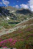 Lanscape-Rododendro de la montaña, lago, correcciones de la nieve Imágenes de archivo libres de regalías