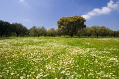 Lanscape in Spring Season Stock Photography