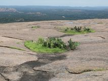 View from atop Enchanted Rock Texas. Lanscape view from atop pink granite dome of Enchanted Rock with wild grass and prickly pear cactus royalty free stock photo