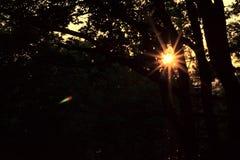 Lanscapefoto van open aardwerkingsgebied met donkere bomen en sudog royalty-vrije stock foto