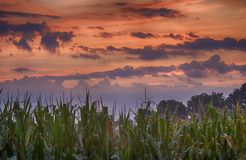 Lanscapes at dawn with sunset. Clouds and beautiful sky. Corn, maize on the field with orange sky, sunrise royalty free stock photography