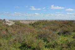 Lansdcape marsh Stock Images