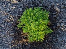 Lansdscaping buske royaltyfri foto