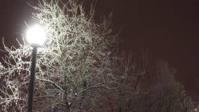Lantaarn en boom in sneeuw tijdens blizzard bij de winteravond stock video