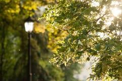 Lantaarn onder Linden Trees Stock Foto's