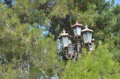 Lantaarn op de achtergrond van bomen Stock Afbeelding