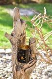 Lantaarn op een stuk van drijfhout royalty-vrije stock foto's