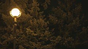 Lantaarn in stadspark tijdens de winternacht Lichte sneeuwval stock video