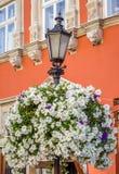 Lantaarnpaal met kleurrijke bloemen die in het bloembed bloeien in de oude straten van Lviv met klassieke architectuur Stock Foto's