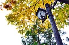 Lantaarnpaal onder boom Stock Afbeeldingen