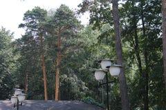 Lantaarns en pijnbomen in de stad van Korolev royalty-vrije stock foto's