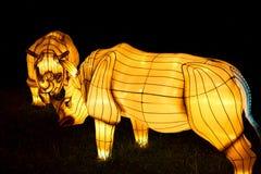 Lantaarns van de Illuninated de Aziatische rinoceros Royalty-vrije Stock Afbeeldingen