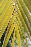 Yellow leaf background Stock Photo