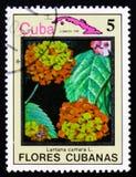 Lantanacamara en kaart van Cuba, serie Bloemen van Cuba, circa 198 Stock Afbeelding