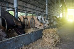 Lantbruk- och djurhållningbegrepp royaltyfri fotografi