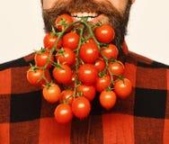 Lantbruk- och höstbegrepp Bonden rymmer körsbärsröda tomater som skägg fotografering för bildbyråer