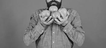 Lantbruk- och höstproduktbegrepp Mannen med skägget luktar äpplen royaltyfria bilder