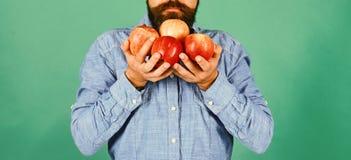 Lantbruk- och höstproduktbegrepp Mannen med skägget luktar äpplen royaltyfri fotografi
