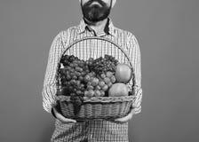 Lantbruk- och höstskördbegrepp Manlig handhållkorg arkivbilder