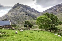 Lantbrukarhem på Kerry Highlands Royaltyfri Foto