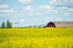Lantbrukarhemmet med Canolafältet i förgrund med Kanada sjunker flyg arkivfoto