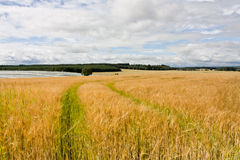 lantbrukskott Arkivbild