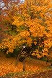 Lanten nel parco giallo di autunno Immagini Stock