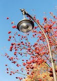 Lantern and autumn Royalty Free Stock Photo