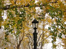 Lantern and autumn trees royalty free stock images